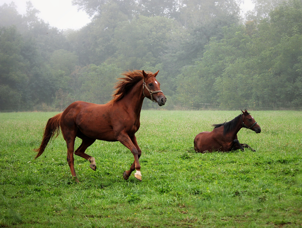 Know your horse and signs of heat exhaustion