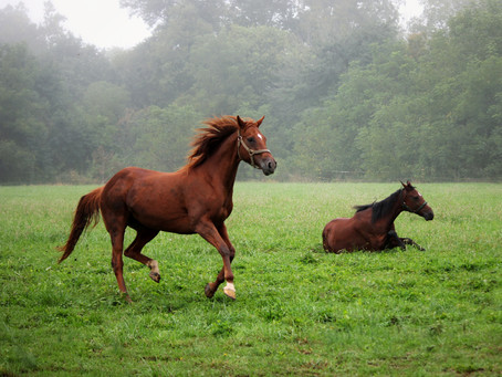 Is my horse's manure healthy?
