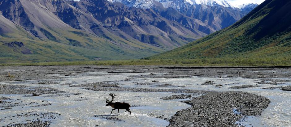 Top 10 Wildlife Safaris in America