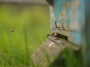 It's official: The bee has been declared the most important living being on the planet