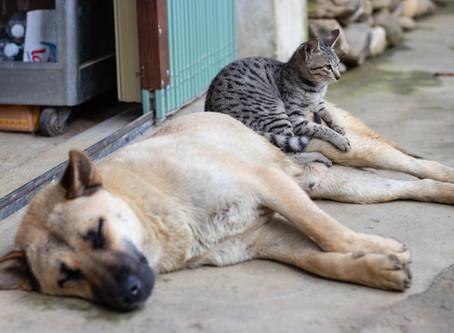 Кога да потърсите своя ветеринар?