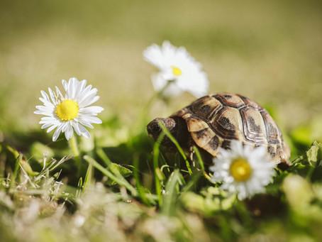 Sinn, Schreiben und Schildkröten