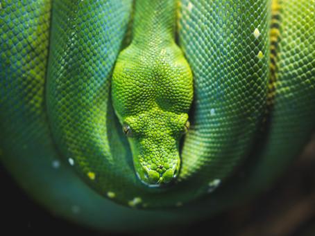 Serpenti e Pregiudizio – Filosostenibile