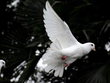 Peace -- Message of the Day