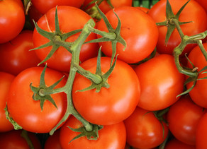 10 Proven Tips for Growing Tomatoes