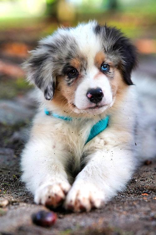 Train&Chew Puppy box