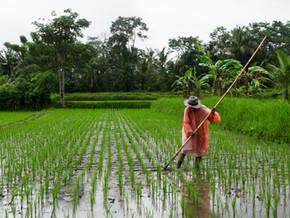 Helping Small Farms Overcome Compliance Roadblocks