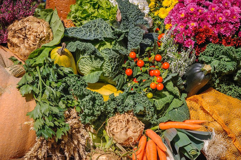 photos of vegetables from a garden
