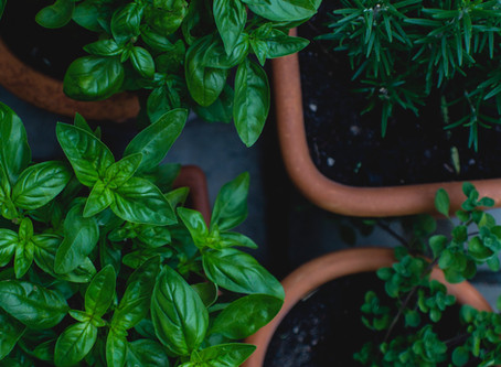 How to Reduce Food Waste - Herbs & Salad Edition