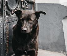 бездомно куче - lubkailievakk.com