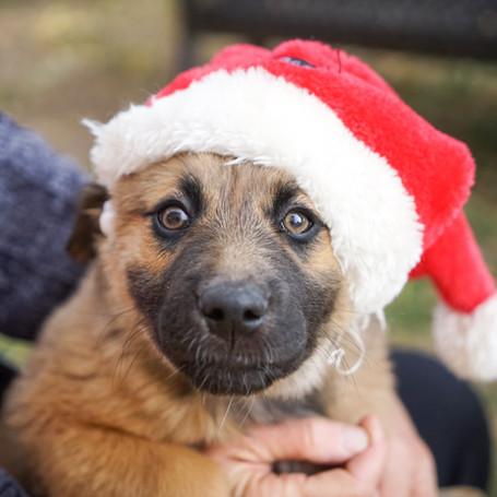 Last Minute Pet Holiday Photos