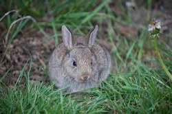 Bunny Trenewydd