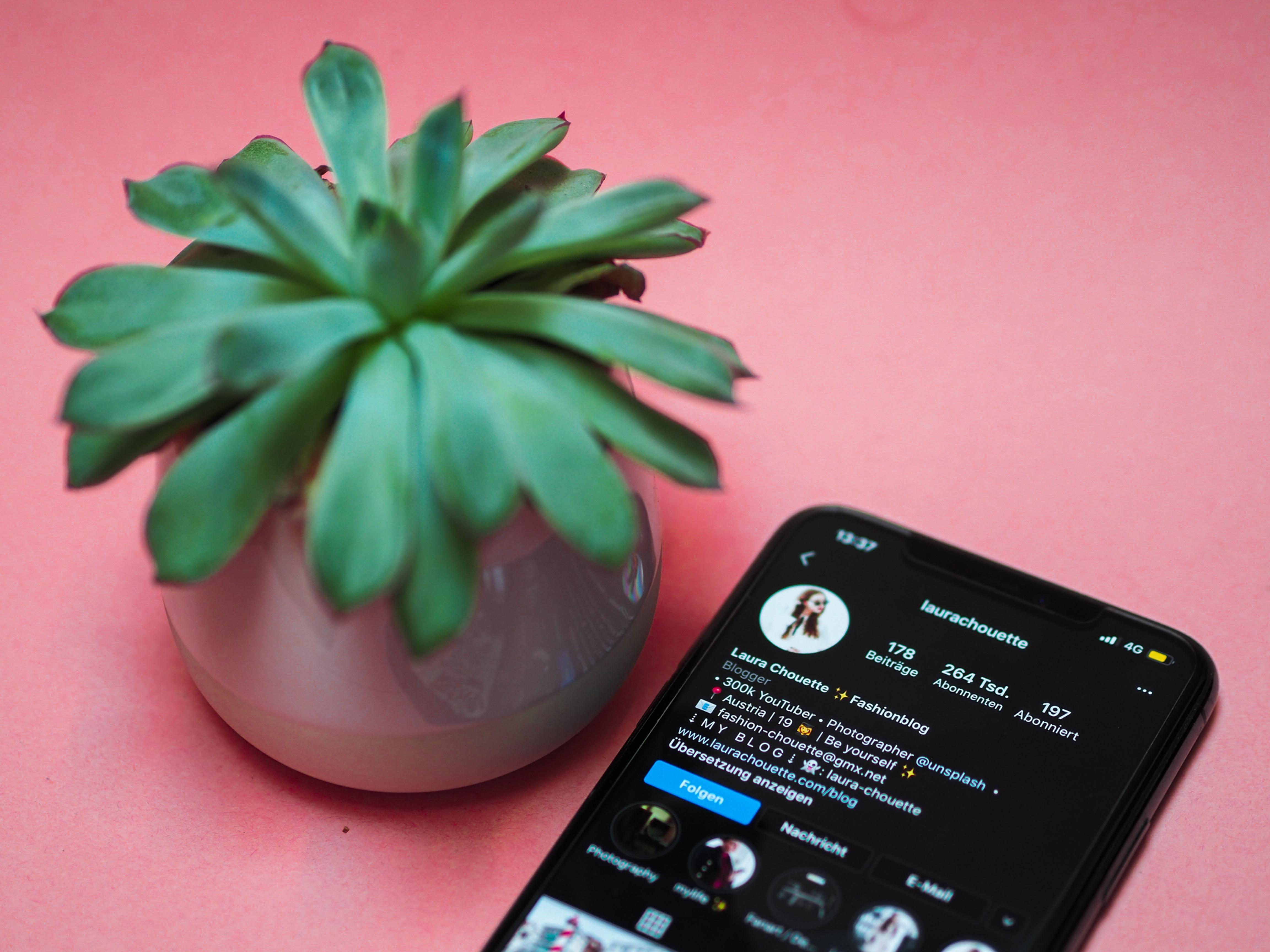 Social Media Consultation/ Growth Plan