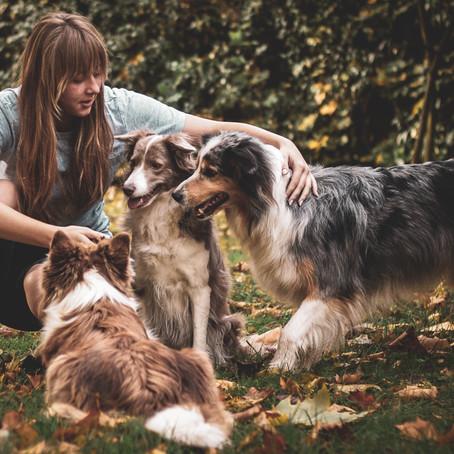 Köpekleri Kısırlaştırmak Doğru mu?