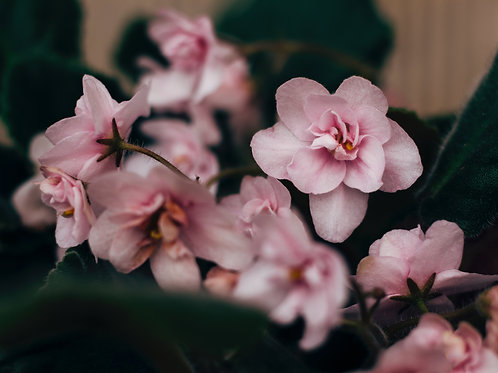 Flowering Seasonal Plant