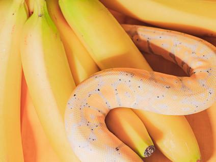 Bubble&Squeak: Phallic Fruit