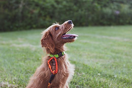 How dogs learn? Obedience Workshop
