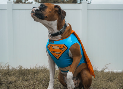 Using Shock Collars for Dog Training – Is It Ok?