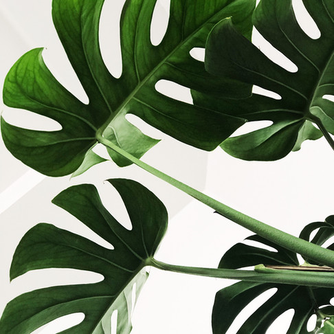 6 Tips to Avoid Greenwashing (and why it's important)