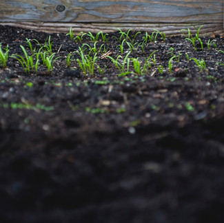 Plant A Cover Crop to Improve Soil