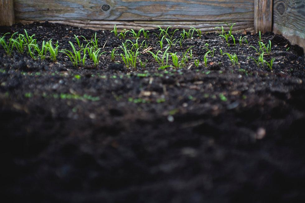 Plant & Soil Science