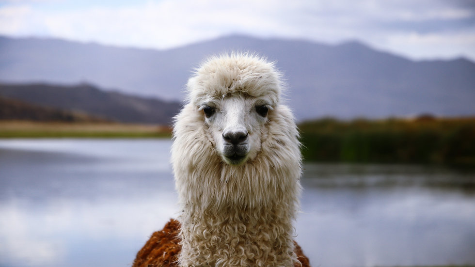 Internship in Peru