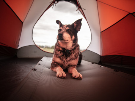 What are the top tips for taking your dog tent camping?