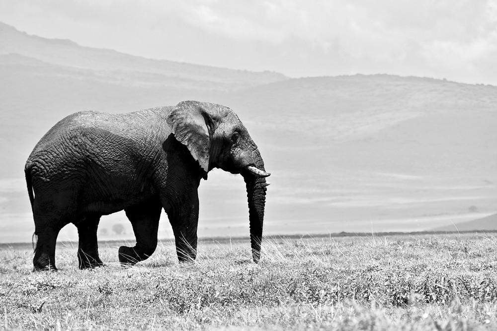 Photo of an elephant symbolizing a big tech startup idea.