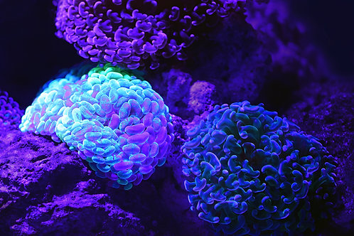 The DNA Flush Empowerment - Mental, Emotional & Spiritual Body Clearing