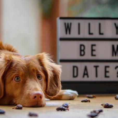San Valentín y tu mascota