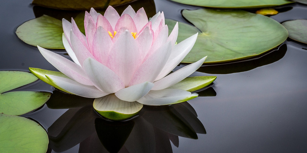 Meditation For Peace, Prosperity, & Enlightenment (All levels welcome)