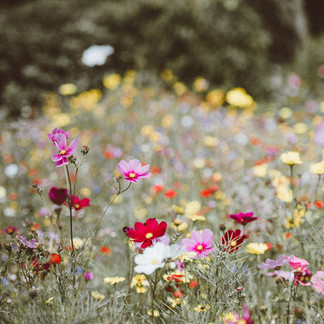 Help The Bees, Plant Wildflowers!