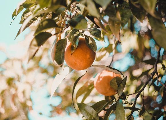 Sweet Valencia Orange Olive Oil