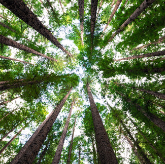 10 Benefits of Planting Trees