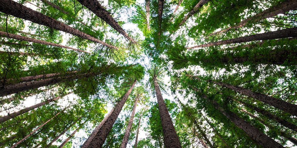 How Forests Can Link to Cities