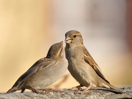 LESSONS FROM A SPARROW