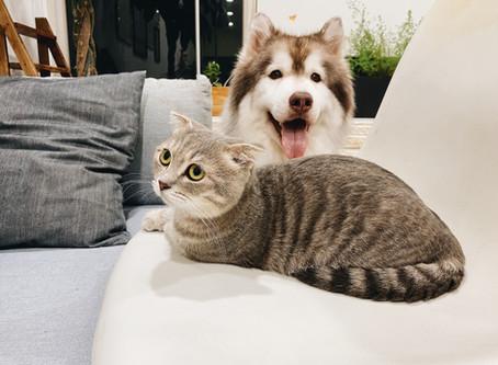 Comunicado - Seguro de Mascotas