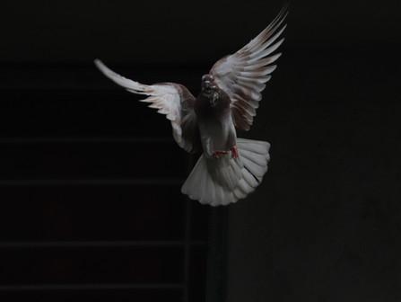 El Espíritu Santo: el gran desconocido