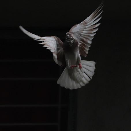 Day 17:  Holy Spirit