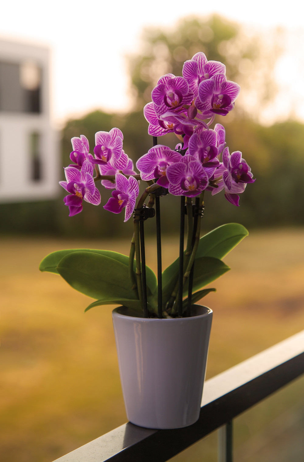 orchid flowers contain ocimene terpenes