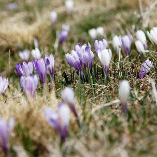 How And When To Plant Spring-Blooming Bulbs