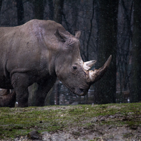 Állatfajok százai halhatnak ki az évszázadban
