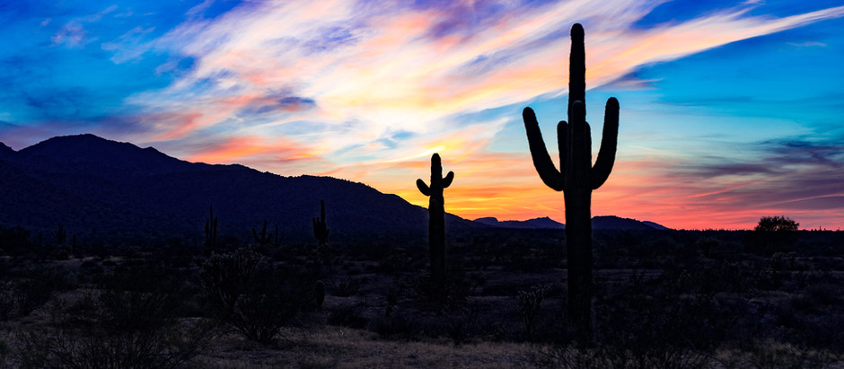 Entrepreneurs: Float like a Butterfly, Sting like a...Cactus?