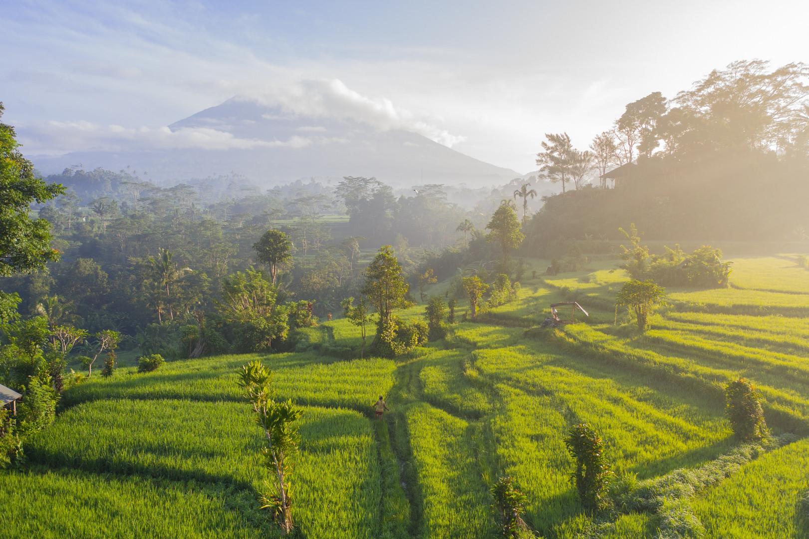 Bali   Image by Geio Tischler