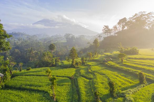 Bali | Image by Geio Tischler
