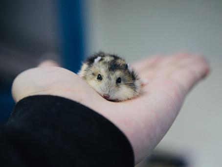 5 Fakta Unik Hamster yang Jarang Diketahui