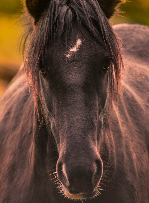 A horse will reflect exactly what you need to see about yourself. Are you brave enough to ask? Are you strong enough to listen? Are you humble enough to learn?