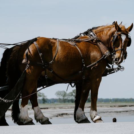 Pony & Cart