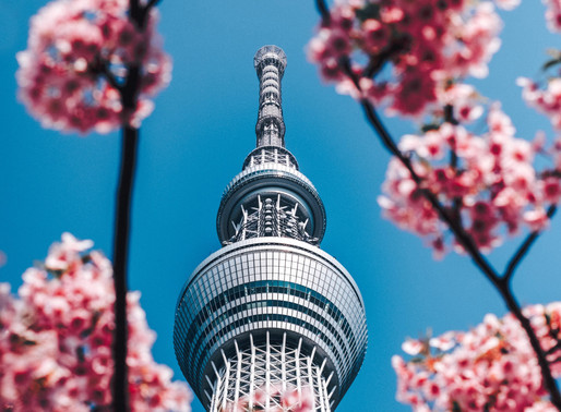 Japan: Cherry Blossoms make an early arrival this season