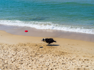 Can your dog join you for some summer beach fun?